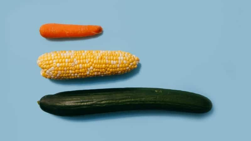 como aumentar o tamanho do pênis: na imagem, uma cenoura, milho, pepino, de todos os comprimentos e larguras