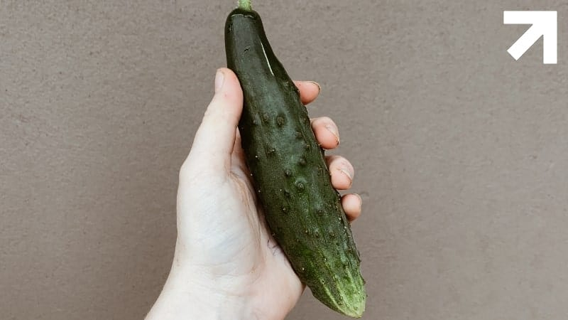 pepino com bolinhas na casca, mas tudo depende do que você quer dizer com espinhas no pênis